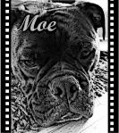 Sandkastentod_Moe(Hund)